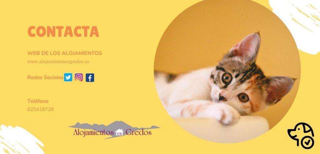 contacto alojamientos para mascotas en la sierra de gredos